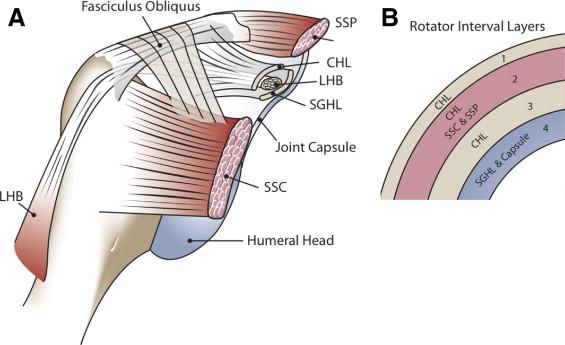 rotator interval cuff adhesive capsulitis frozen shoulder