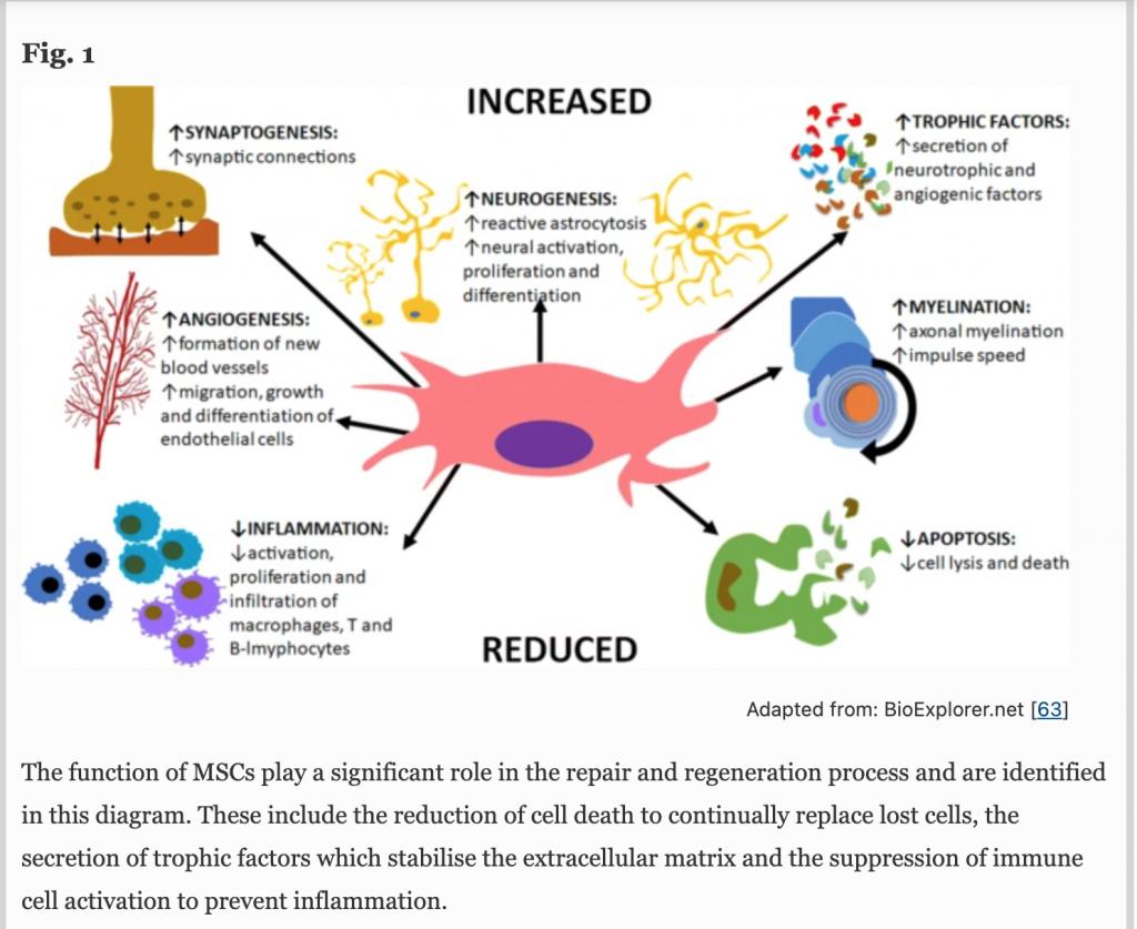 Stem cell mechanism