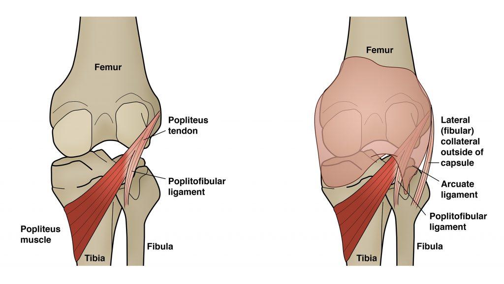 popliteus tendon and posterolateral corner anatomy